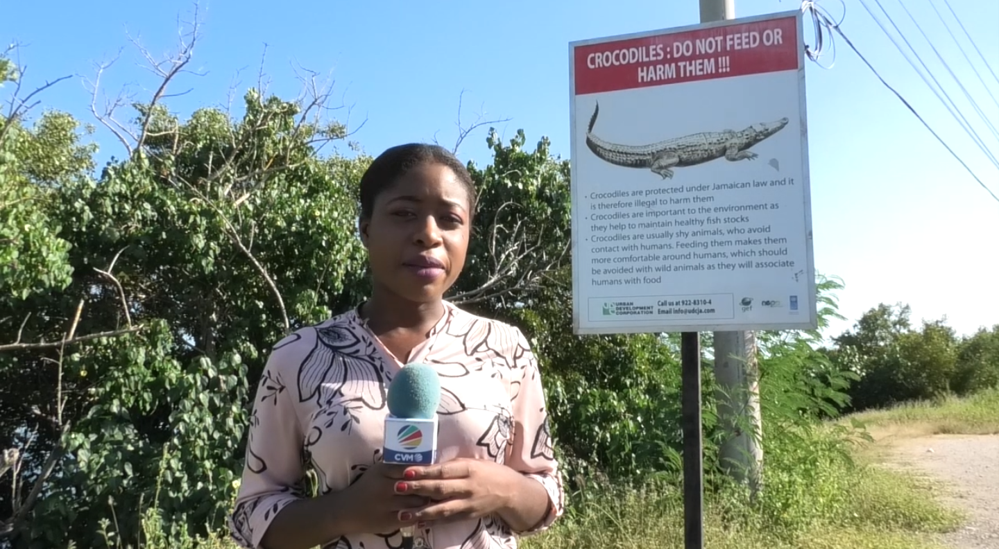 PortmoreResidentsSay Visitors And Locals Must Be More Cautious Of Crocodile Habitat