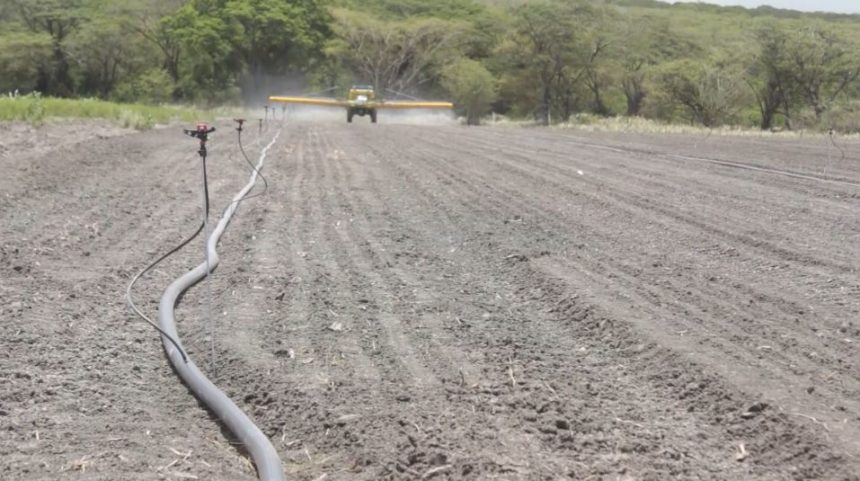 Agriculture Is Big Business In Jamaica