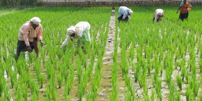 Agriculture StrategyTo Boost Economic Growth And Sustainable Development