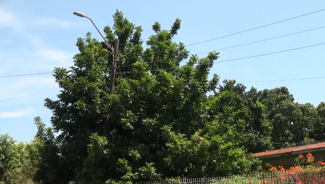 JPS Says It's Not Responsible For Trees On Residents' Property