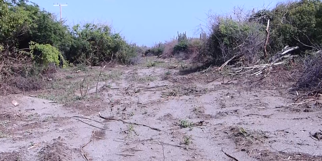 NWC: Mangroves Excavation Undesirable but Necessary